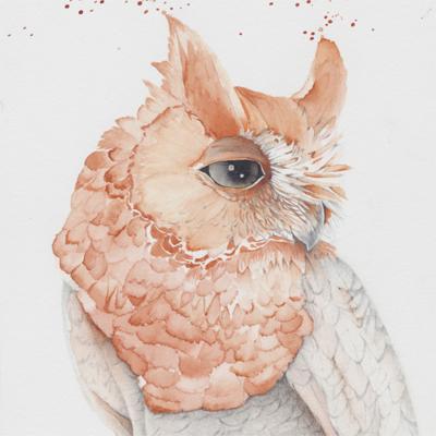 Biota3_owl_WOS